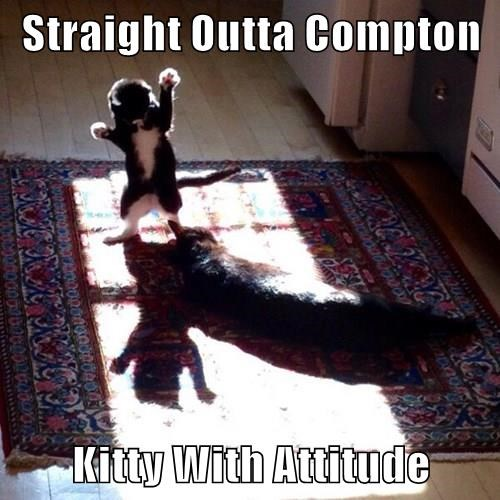 animals cat attitude compton kitty caption - 8444573440