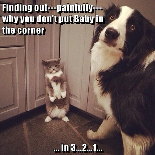 cat,dogs,baby,caption,corner