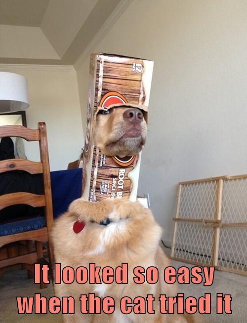 animals dogs box stuck lab if i fits i sits - 8444736768