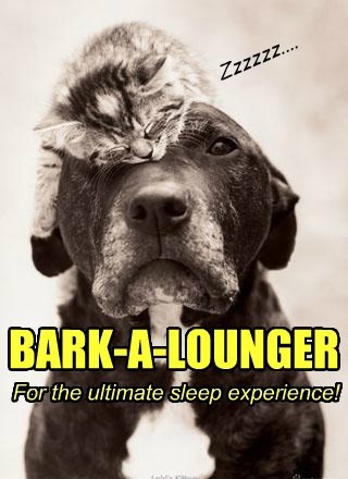 dogs lounge puns sleep Cats - 8444752896