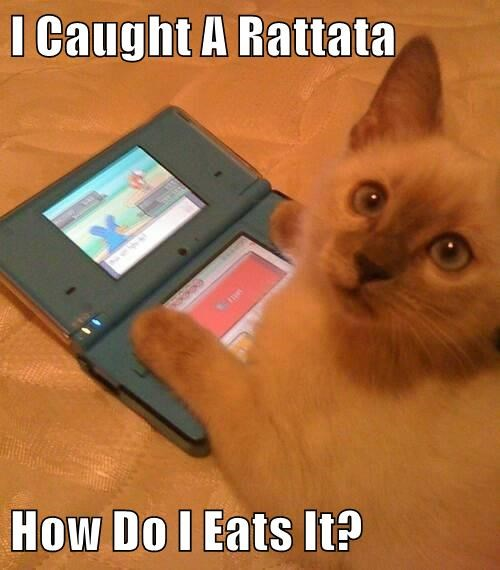 I Caught A Rattata  How Do I Eats It?