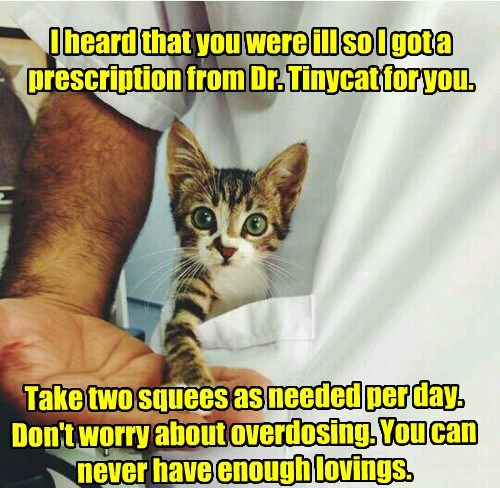 cat squees doctor prescription caption two - 8445387776