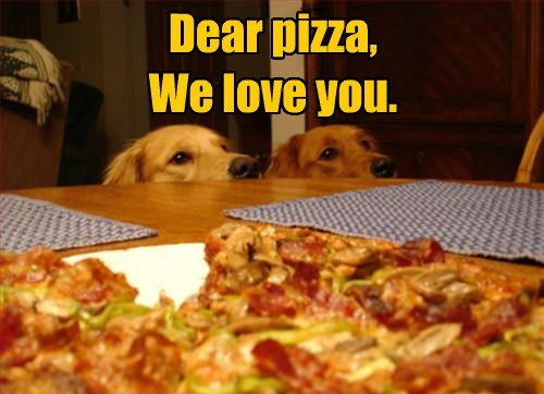 dogs pizza golden retriever - 8445489920