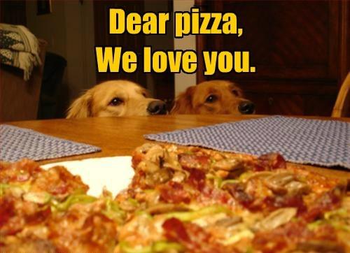 dogs pizza golden retriever - 8445489920