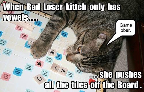 bad,cat,loser,caption,tiles