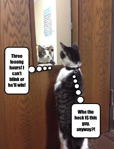 Staring,mirror,Cats