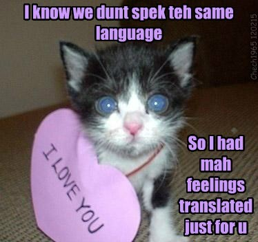 valentine,love,Cats