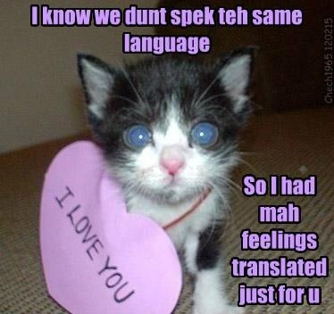 valentine love Cats - 8445723648