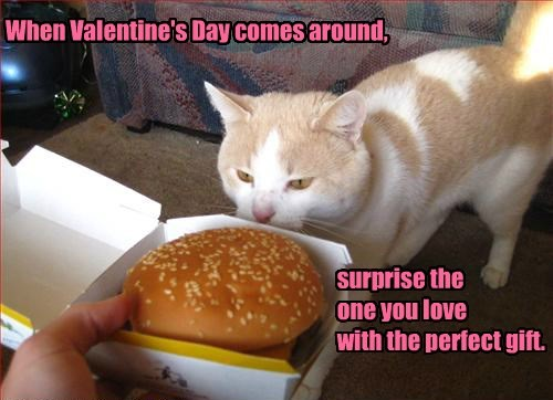 I Can Has Cheezburger valentine noms Cats