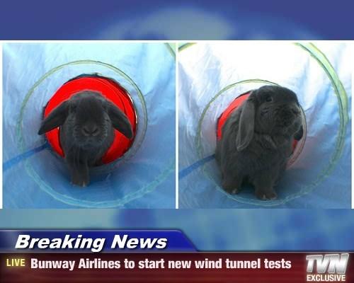 bunnies wind tunnel tests airways funny - 8445872896