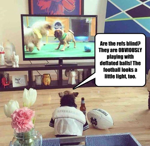 balls dogs Puppy Bowl deflategate football - 8445913600