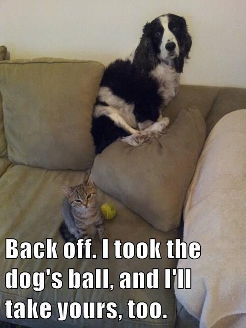 animals dogs ball vet Cats - 8445916672