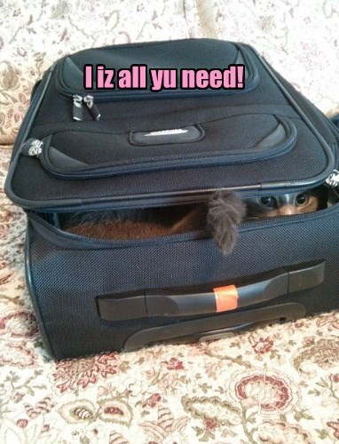 trip,Cats,luggage