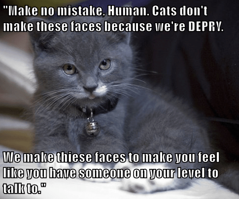 animals truth kitten Cats squee derp - 8446055424