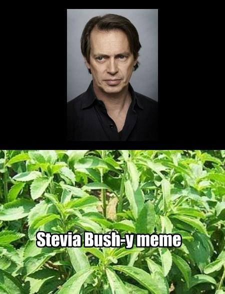 dank meme of steve Buscemi