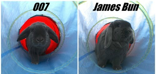 james bond puns 007 bunny - 8446144512