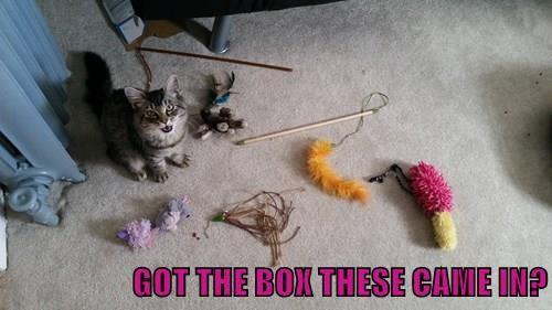 animals captions Cats funny - 8446208000