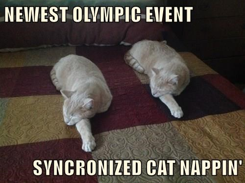 NEWEST OLYMPIC EVENT  SYNCRONIZED CAT NAPPIN'