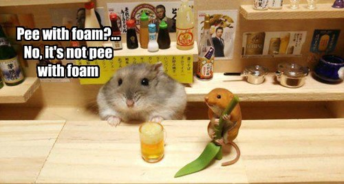 tiny pee hamster what is this squee - 8446247680