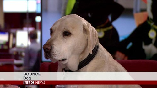 funny-news-fail-dogs-bbc