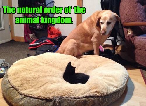 captions Cats funny - 8446378496