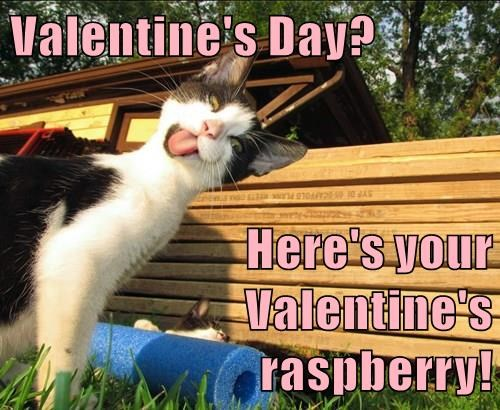 Valentines Day Heres Your Valentines Raspberry Lolcats Lol