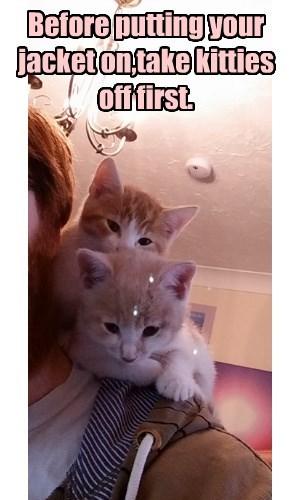 tabby advice Cats