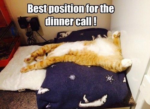 Best position for the dinner call !