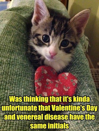 Awkward valentine coincidence Cats - 8446622208