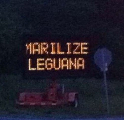 always marilize the leguana