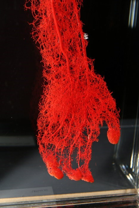 that's a lot of blood vessels