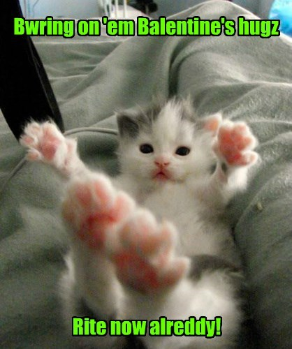 toes kitten valentine Cats - 8446731776