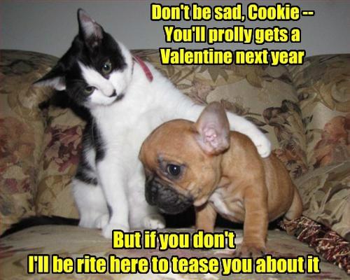 puppy valentine Cats - 8446860800