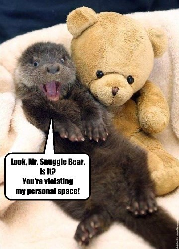 cute funny otter teddy bear personal space - 8446880256