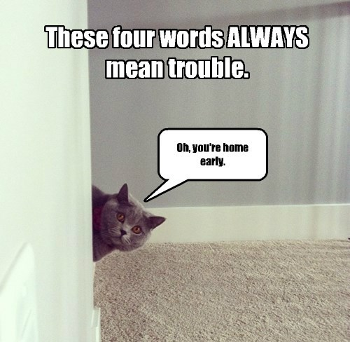 captions Cats funny - 8446917376