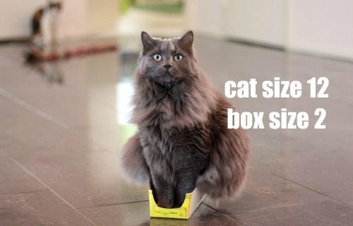 box if i fits i sits Cats - 8446998272
