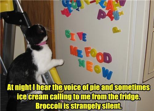 cat voice broccoli pie silent - 8447003392