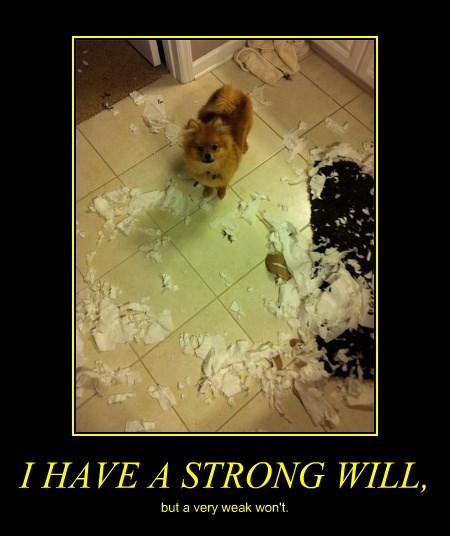 I HAVE A STRONG WILL, but a very weak won't.