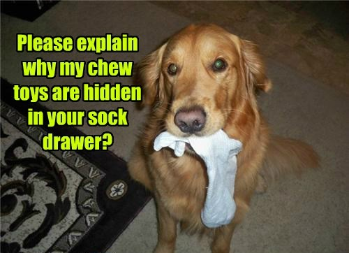 Please explain why my chew toys are hidden in your sock drawer?