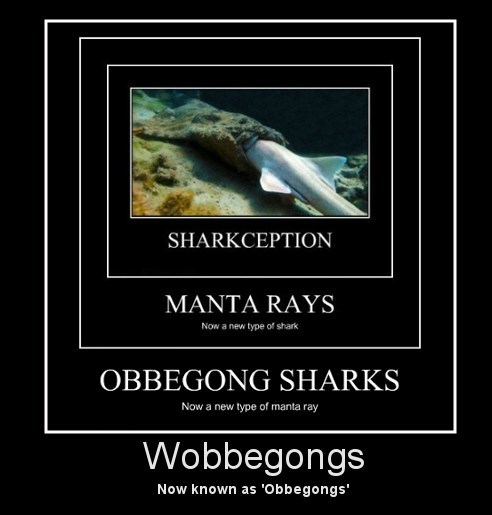 Inception words shark funny - 8447127808