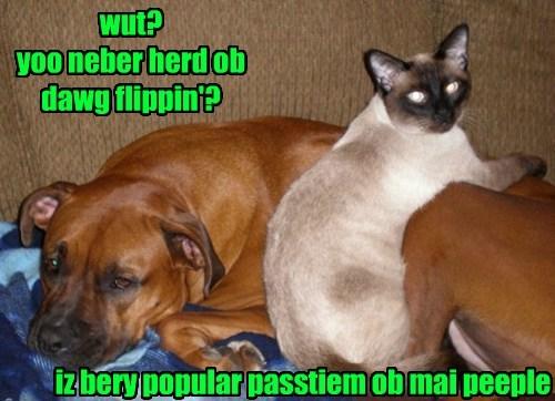 dogs Cats flip hobbie - 8447296256