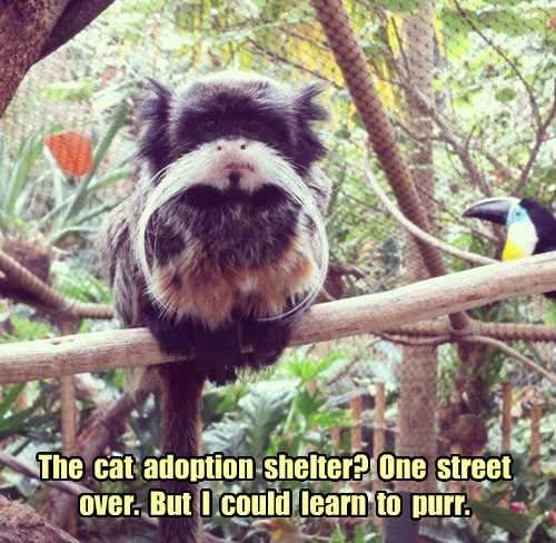 purr monkey Cats - 8447531008