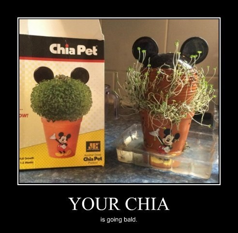 chia mickey mouse funny - 8447704832
