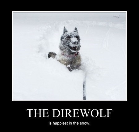 dogs,snow,cute,funny,direwolf