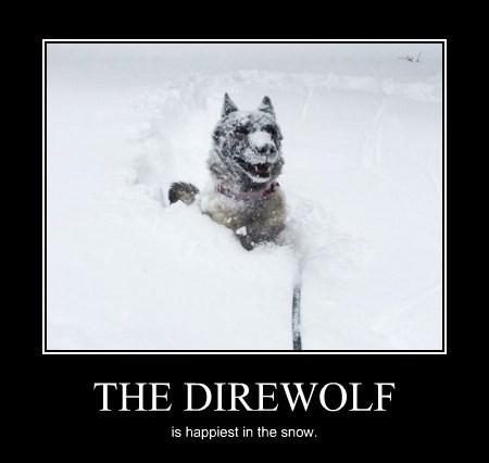 dogs snow cute funny direwolf - 8447705344