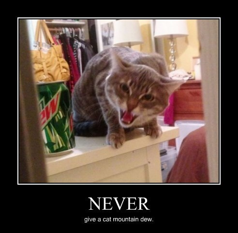 caffeine,mountain dew,Cats,funny