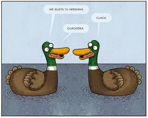 cualquier pato