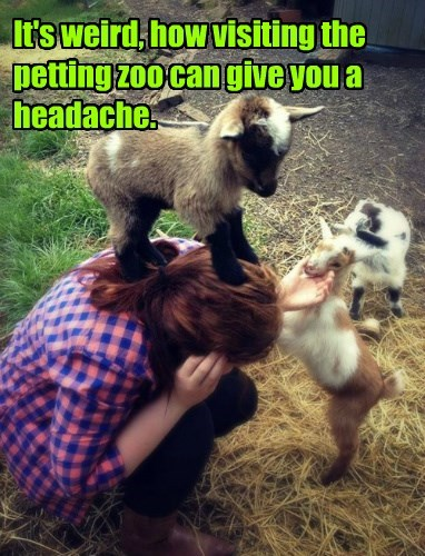 It's weird, how visiting the petting zoo can give you a headache.
