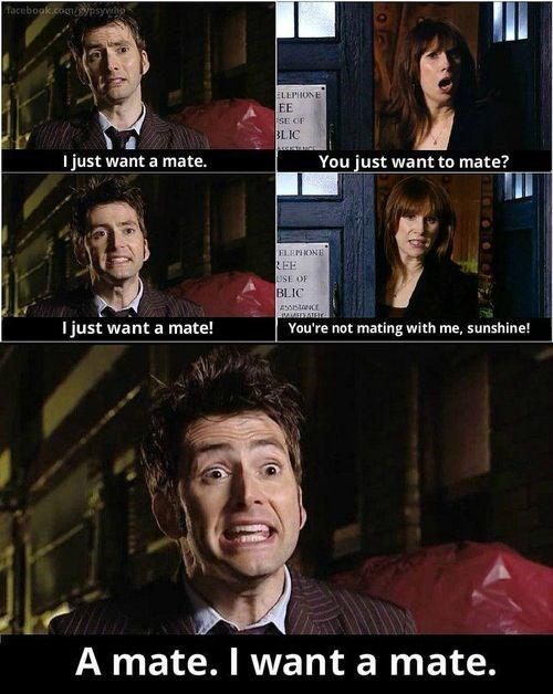 funny-doctor-who-doctor-donna-noble-want-a-mate