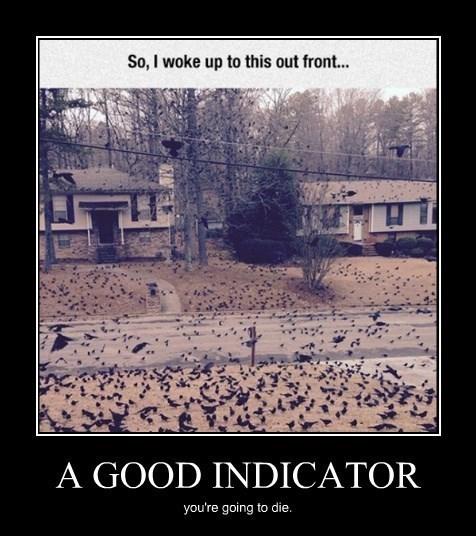 wtf die indicator funny - 8448323328